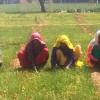 Jagrak Krishak: Empowering Women Farmers In Rajasthan